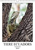 Tiere Ecuadors (Wandkalender 2019 DIN A4 hoch): Die faszinierende Tierwelt Ecuadors (Monatskalender, 14 Seiten ) (CALVENDO Tiere)