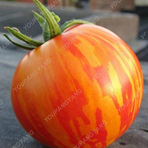 100 graines / paquet Graines rares Noir tomate très savoureux Nutritive bruyères Légumes Graines Bonsai pour jardin plantation Easy Grow Bleu