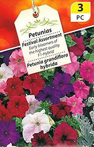 3 packs Petunias Festival Assortment. 600 Flower Seeds each pk/Early bloomers of the highest