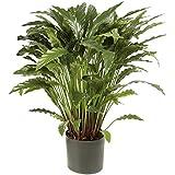 Floral Concept Plants&Trees - Calathea, 85 x 45 x 45 cm, color verde natural