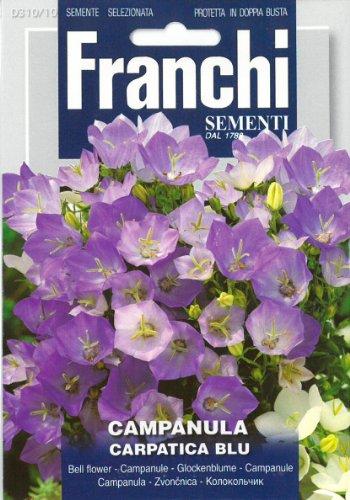 Franchi Cloche Fleur Campanula Carpatica Bleu