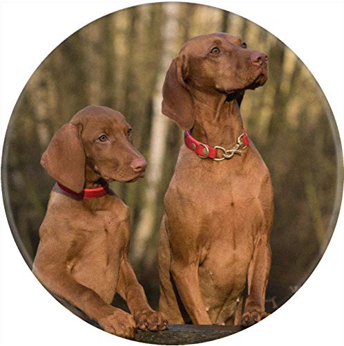 Azeeda 77mm 'Vizsla Hunde' Pin Knopf-Abzeichen (BB00003208) -