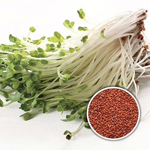 250 g BIO Keimsprossen Kresse Kressesamen für die Sprossenzucht Grünkraut Mikrogrün
