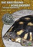 Die Breitrandschildkröte (Art für Art / Terraristik)