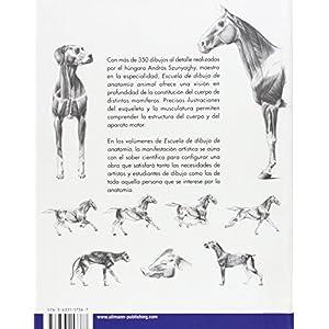 Escuela de dibujo de anatomía animal
