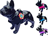 Lushpetz Blumen-Hundegeschirr im rosa schwarzen Blauen oder purpurroten Entwurf für Kleine mittlere Hunderassen XSmall (1 Passt auf die Brust 33.5cm /13