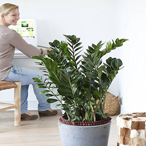 plante interieur solide