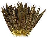 ERGEOB Federn, Fasan federn, 25-30cm/ 10-12 Zoll Länge Fasan Schwanzfedern gelb 20 stück