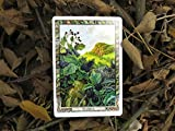 The Druid Plant Oracle: Working with the magical flora of the Druid tradition (book and cards)