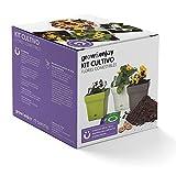 Grow & Enjoy Samba - Kit de cultivo Caléndula, maceta cuadro, 18 cm, color topo