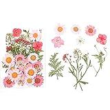 DIY Geprägte Getrocknete Blumen Natürliche Rosa Gänseblümchen-Blumen Perfekt Für Das Dekorative Make-up Des Gesichtes, Herstellung Von Grußkarten, Diy Phone Shell, Kunst- & Handwerksmaterialien
