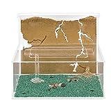 AntHouse Ameisenfarm Modell L (Ameisen mit Königin Free)