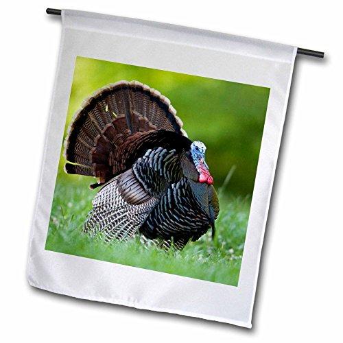 3dRose Wild Turkey Gobbler.-Garten Flagge, 12durch 45,7cm (Wild Turkey-shirt)