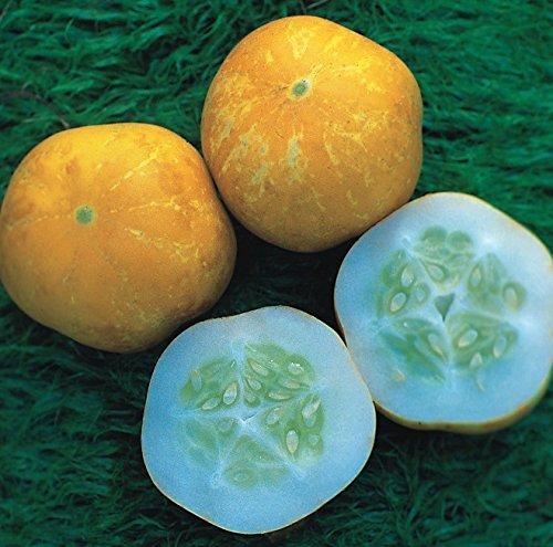 Concombre - Crystal Lemon - 30 Graines