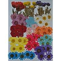 HANDI-KAFU mehrere Getrocknete Blumen, Pink Larkspur, Mini Rose, Hortensie, Daisy, echten gepressten Getrocknete Blumen