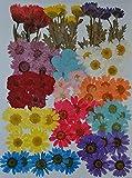 Handi-Kafu, fiori essiccati multipli: delfinio rosa, mini rose, ortensia, margherita, veri fiori essiccati