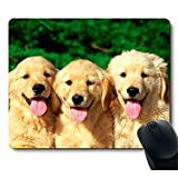 A golden Retriever with a Smiling Face to Customize The Dog's Mouse Pad.