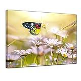 Kunstdruck - Schmetterling auf einer Blume - 60x50 cm - Bilder als Leinwanddruck - Wandbild von Bilderdepot24 - Tierwelten - Insekt - Falter auf einer Wiese