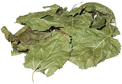 Maulbeerbaum Laubblätter - Einheimisch, grün, luftgetrocknet, 10 Stk. - Garnelen- Wasserschnecken- und Krebsfutter