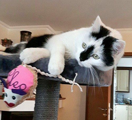 LunaChild giocattolo del mouse WISH NAME giocattolo del gatto nome valriano sonaglio gatto rosa