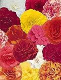 Fiore - Begonia - Nonstop Mix F1-10 Semi Pellettati