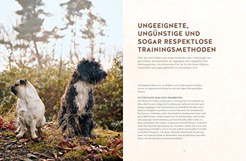 Freilauftraining für den Hund - 4