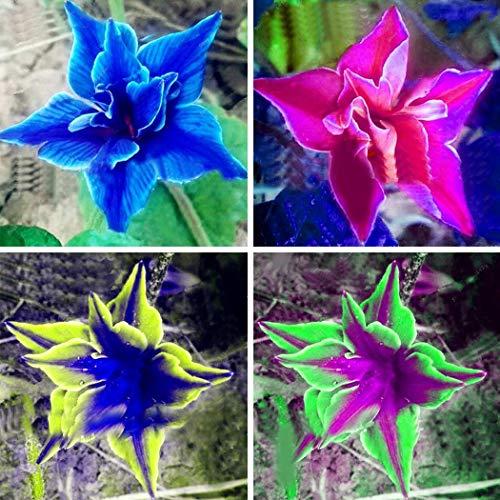 Yukio Samenhaus - Selten 50 Stück Ballonblume (Saatgut) Lisianthus Eustoma Gastgeschenke Blumensamen Bonsai winterhart mehrjährig für Garten und Balkon