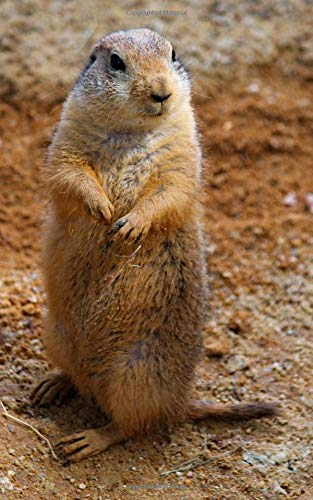 Notebook: Prairie dogs standing rodent cute curious mammal rodent wolf rabbit elk squirrel moose - Bobcat-pin