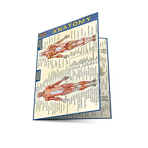 Anatomy - Pocket-Sized Reference Guide (4 X 6) (Quick Study: Anatomy) (4 X 6 Pocket Chart)