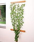 Home & Garden 301010208-VH Seilrankhilfe Rankhilfe mit Halter und Seil aus Edelstahl