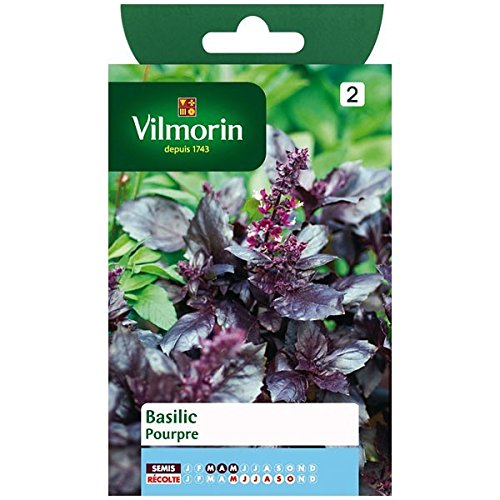 Vilmorin - Sachet graines Basilic pourpre