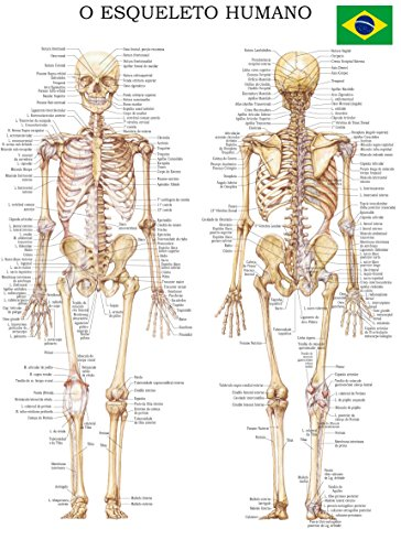 O esqueleto humano: Rápida Tabela de Referência (Portuguese Edition ...