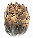ERGEOB 100 stück Natürliche Fasan Haar Feder geflügel Fasan Federn großer Punkt Federn 5-8cm