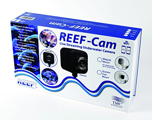 reef-cam-live-streaming-underwater-camera