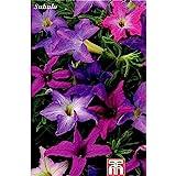 ¡Gran venta! 500 PC Raras Semillas Bonsai Semilla Petunia hybrida flores Semillas de balcón en maceta de flores de la petunia del jardín de la planta de semillero de flores 20