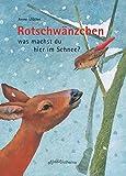 Rotschwänzchen - was machst du hier im Schnee