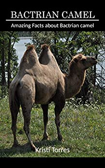 Kristi Torres - Amazing Facts about Bactrian camel