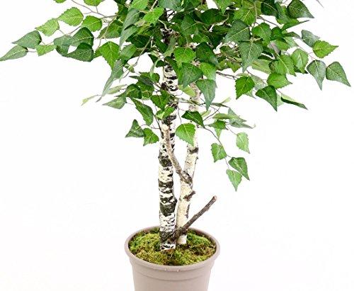 Birken Kunstbaum 150cm mit Naturstämmen und 924 Textilfaser Blätter – Kunstpflanze