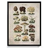 VP1096UK Pilz-Illustration Vintage Print 21, Baumwolle, Rustic Antique, 24 x 36 in