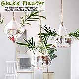 DRAULIC Gartenarbeit Geometrisch geformte transparente Glas Hängevase Modische Wasser Pflanzer Home Dekorative Wandbehang Flasche