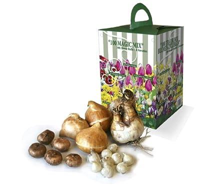 100 Blumenzwiebeln Geschenkbox mit 6 verschiedene Sorten, 100 Stück von Greenbrokers Limited bei Du und dein Garten