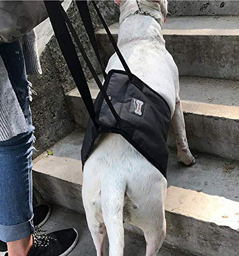 Ylen Arnés Rehabilitación Apoyo Perros Eslinga Ayuda