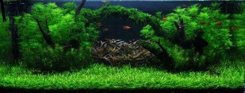 Moosbrücke Unterwasser-Landschaft Moosbrücke für 60 Liter Aquarium