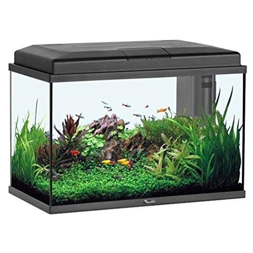 meilleure aquarium