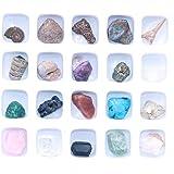 Namvo Juego de 20 minerales naturales mezclados con piedras naturales animales fósiles para la escuela educación geológica de