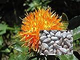 Portal Cool 400 semi di cartamo Carthamus tinctorius Falso zafferano Färberdistel cartamo