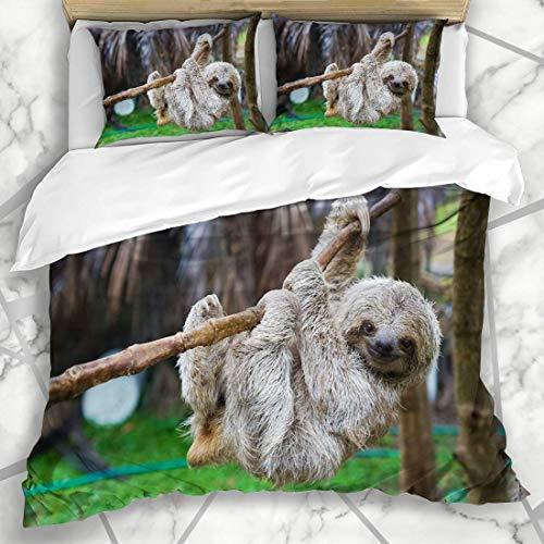 Soefipok Bettwäschesets Moving Brown Puerto Sloths Rettungszentrum Costa Rica Mammal San Wildlife Green Baum mit DREI Zehen und Mikrofaserbettwäsche mit 2 Kissenbezügen