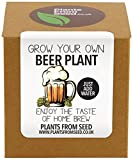 Plants from Seed Grow Your Own Beer Plant Kit