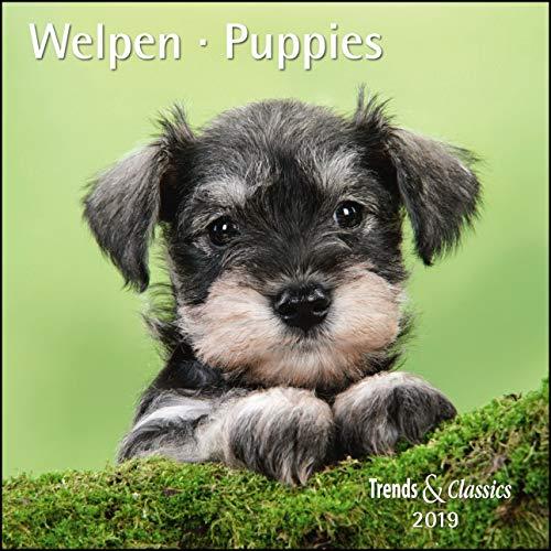 Welpen Puppies 2019 - Broschürenkalender - Wandkalender - mit herausnehmbarem Poster - Format 30 x 30 cm