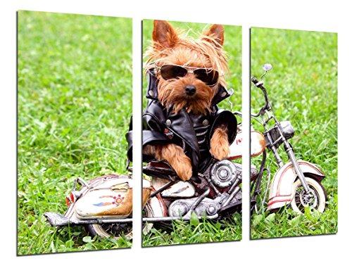 Cuadro Moderno Fotografico Perro Con Moto,Infantil, 97 x 62 cm ref. 26267